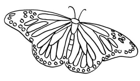 mariposa-animales-colorear