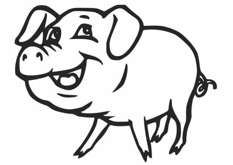 cerdo-colorear