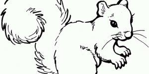 ARDILLA » Diviértete descubriendo y coloreando a un simpático mamífero