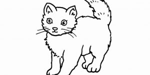 GATO » Pinta y descubre las características de este mamífero doméstico