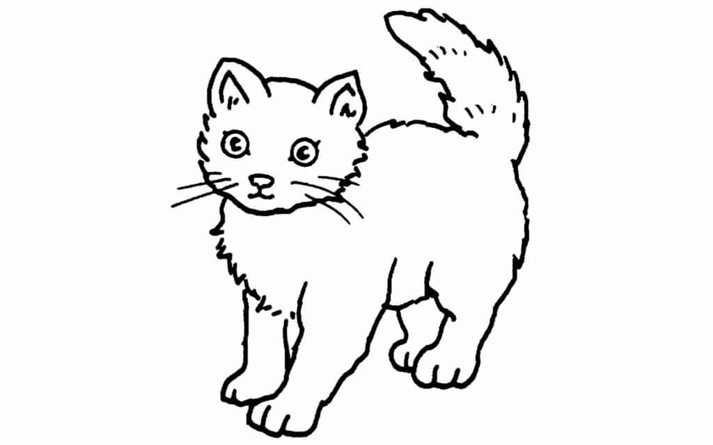 Gato Pinta Y Descubre Las Caracteristicas De Este Mamifero Domestico