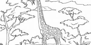 JIRAFA » Conoce y colorea el mamífero más alto del mundo