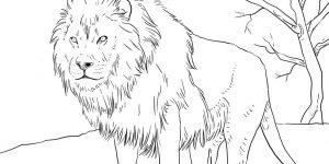 LEÓN » Colorea al popular carnívoro y descubre sus características