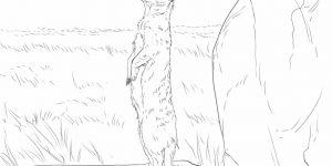 SURICATA » Colorea y conoce al pequeño mamífero del desierto africano