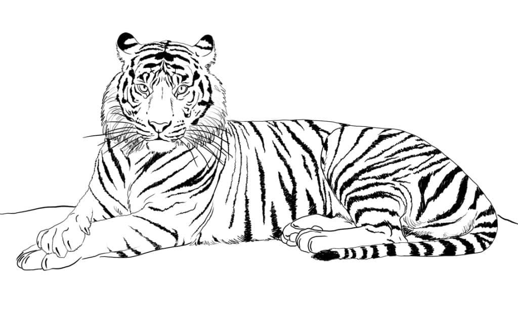 Tigre Pinta Al Felino Más Grande Mientras Aprendes De él