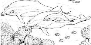 DELFÍN » Pinta y conoce al inteligente mamífero acuático