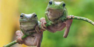 RANA » Un pequeño anfibio que conocerás con imágenes para colorear
