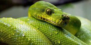 SERPIENTES » Aprende sobre estos reptiles y coloréalos