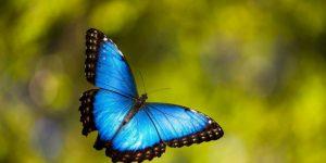 MARIPOSA » Diviértete con el pintoresco insecto de alas adornadas