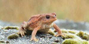 SAPO » Diviértete coloreando al anfibio de piel seca y verrugosa